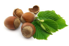 Hazelnuts with leaves Stock Photos