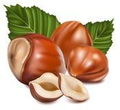 Hazelnuts with leaves. Photorealistic  illustration. Hazelnuts with laeves Royalty Free Stock Photo