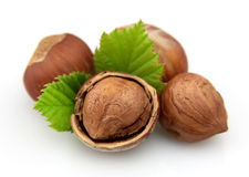 Hazelnuts with leaves Stock Photography
