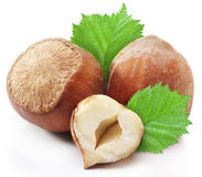 Hazelnuts with leaves. Stock Photo