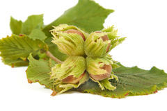 Hazelnuts with leaves isolated on a white Stock Photo