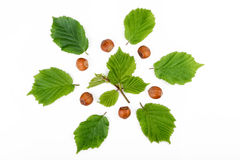 Hazelnuts with leaves isolated on white background. Top view Stock Images