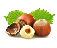 Hazelnuts with leaves isolated on white. Background Stock Image