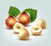 Hazelnuts with leaves Stock Photo