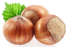 Hazelnuts with leaves. Stock Image