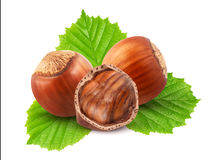 Hazelnuts with leaves Royalty Free Stock Image