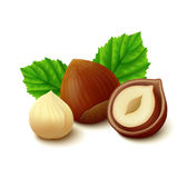Hazelnuts with leaves on white background Royalty Free Stock Photos