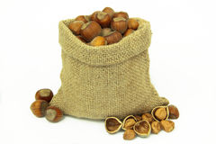 Hazelnuts in linen sack on white background. Stock Photos