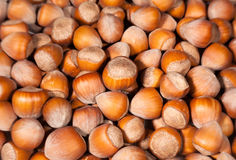 Hazelnuts many Royalty Free Stock Photography