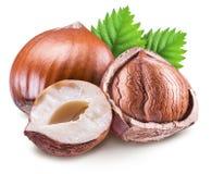 Hazelnuts, nasiono hazelnut i zieleń liście, Ścinek ścieżka fotografia stock