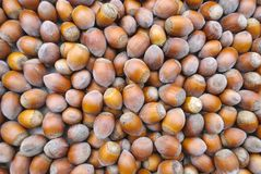 Hazelnuts natural background royalty free stock photos