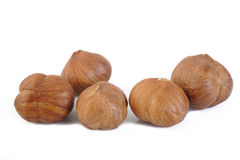 Hazelnuts nut isolated on white background Royalty Free Stock Photography