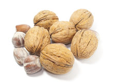 Hazelnuts and Nuts. On a white background Royalty Free Stock Image