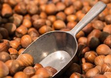 Hazelnuts, Nuts, Brown, Shells Royalty Free Stock Photos