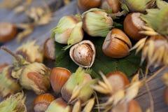 Hazelnuts in nuts shells Stock Image