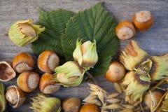 Hazelnuts in nuts shells Stock Photo