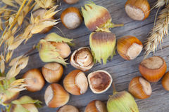 Hazelnuts in nuts shells Stock Photography