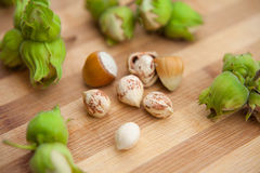 Hazelnuts in nuts shells Royalty Free Stock Image