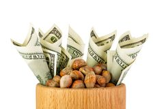 Hazelnuts nuts of Turkish hazel. The concept of hazelnut nuts as. Money earnings of dolars. Isolate on white background, copy space royalty free stock photos