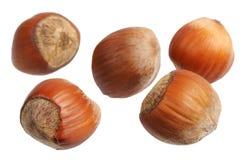 Hazelnuts, odizolowywający Fotografia Royalty Free