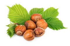 Hazelnuts organic plant with leaves on white background Stock Photography