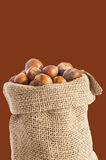 Hazelnuts over a colored background. Some hazelnuts placed over a colored background royalty free stock photography