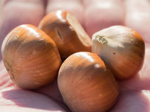 Hazelnuts in palm Stock Photography