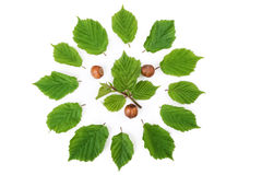 Hazelnuts pattern with green leaves  in round shape on white. Top view Royalty Free Stock Photos