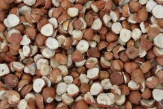 Hazelnuts. Raw Hazelnuts. Nuts. Fresh organic Raw nuts. Hazelnuts texture and background Royalty Free Stock Photo