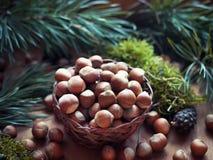 Hazelnuts with pine brunch Stock Photo
