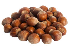Hazelnuts placed over a white background. Some hazelnuts placed over a white background royalty free stock photos