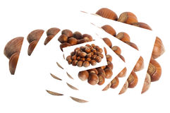 Hazelnuts placed over a white background Royalty Free Stock Images