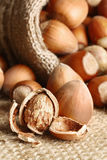Hazelnuts pouring out from a linen bag Stock Photography