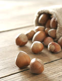 Hazelnuts in a sack Stock Photography