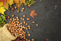 Hazelnuts in a sack with autumn leaves and dried berries and dried berries, space for text. Stock Photos