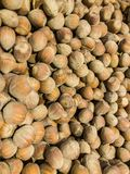 Hazelnuts, set of hazelnuts in retail. Nature and nutrition Royalty Free Stock Images