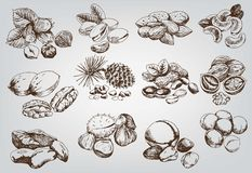 Hazelnuts Royalty Free Stock Image