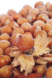 Hazelnuts in shell Royalty Free Stock Photo
