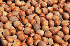 Hazelnuts in shell Stock Photos