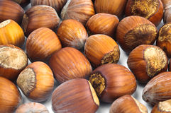 Hazelnuts in the shell. Fistful of brown hazel nuts close up with white background Stock Photo