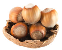 Hazelnuts in shell isolated on white background Royalty Free Stock Images