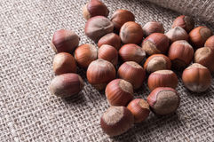 Hazelnuts in shells on the burlap Royalty Free Stock Photo