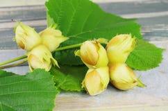 Hazelnuts in shells Royalty Free Stock Photo