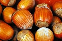 Hazelnuts in shells. Stock Photography