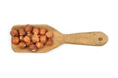 Hazelnuts on shovel Stock Image
