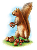 Hazelnuts and squirrel Stock Photos