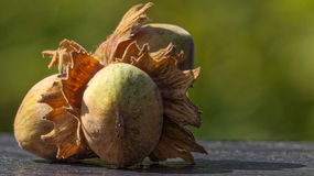 Hazelnuts on table in autumn stock images