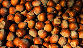 Hazelnuts Texture Stock Images
