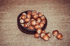 Hazelnuts. Together on  background Royalty Free Stock Images