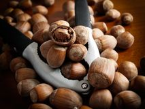 Hazelnuts and tool Royalty Free Stock Photography